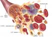 细胞分析有什么意义