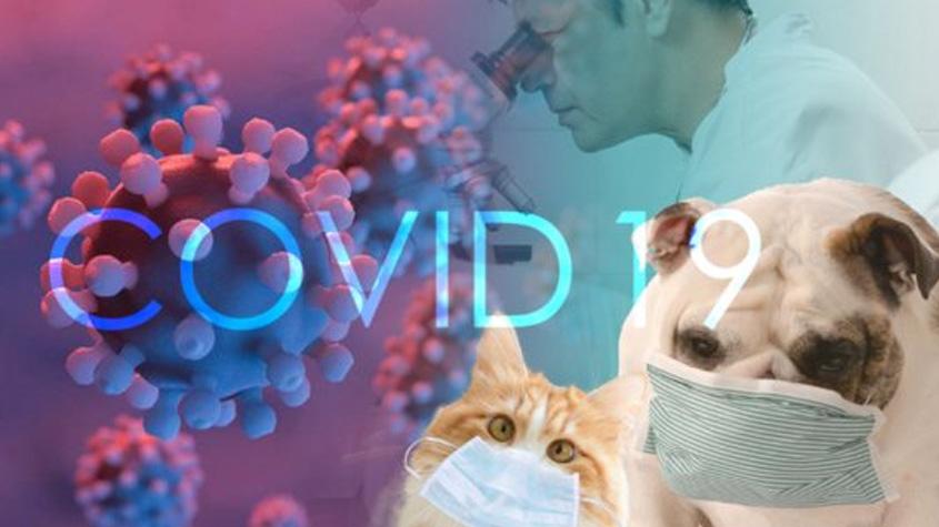 COVID-19 新冠病毒与宠物