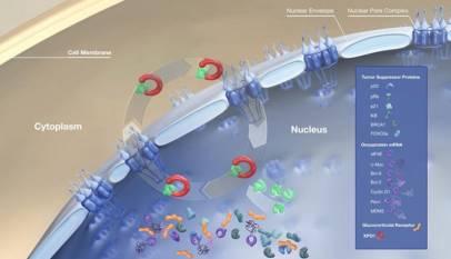 Selinexor用于多发性骨髓瘤的新组合疗法三期临床研究达主要终点-technewschina